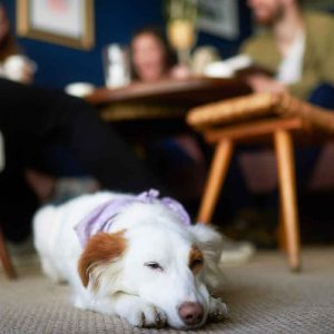 Dog relaxing in dog friendly cafe