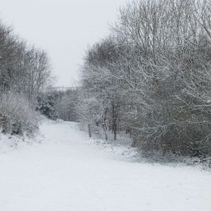 The woodland in the snow in winter