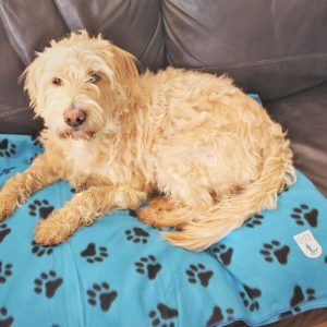 Dog on a guide dogs blanket