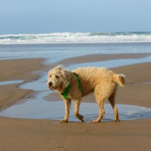 Dog on dog friendly beach