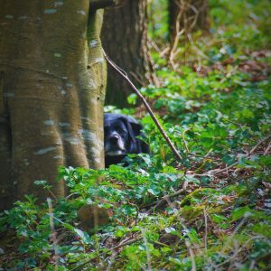 Dog playing hide and seek in the woods