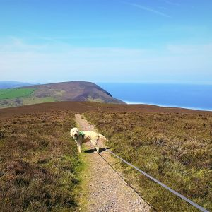 Coastal dog walks at Holdstone Down North Devon