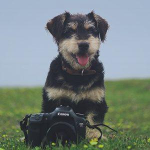 Dog and camera
