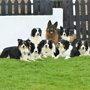 Multiple dogs enjoying their holiday at Woodland Cottages