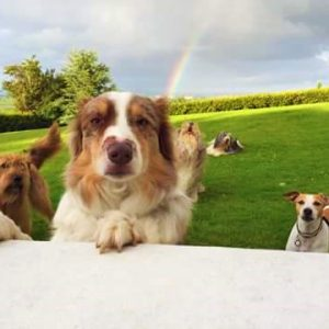 Multiple dogs welcome - we are very dog friendly