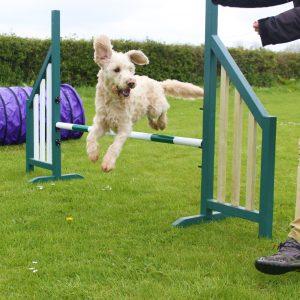 Dog doing agility jump