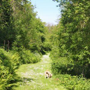 Dog on the grassy woodland ride